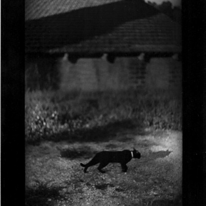 Giacomelli Brunelli photography - The Animals