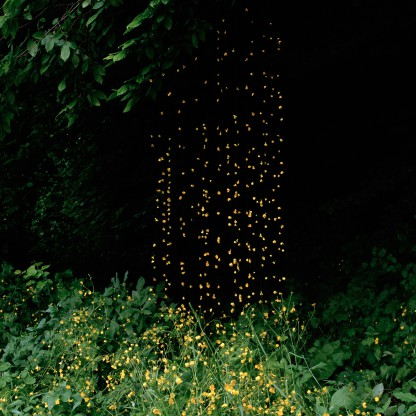 Elspeth Diederix photography - Buttercups, 2007